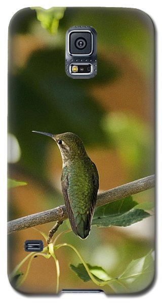 My Green Colored Hummingbird 4 Galaxy S5 Case