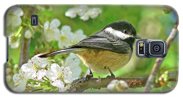 My Little Chickadee In The Cherry Tree Galaxy S5 Case