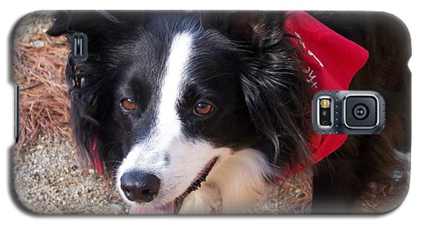 Galaxy S5 Case featuring the photograph Female Border Collie by Eunice Miller