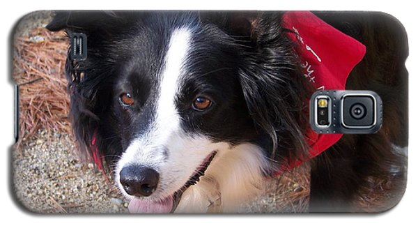 Female Border Collie Galaxy S5 Case