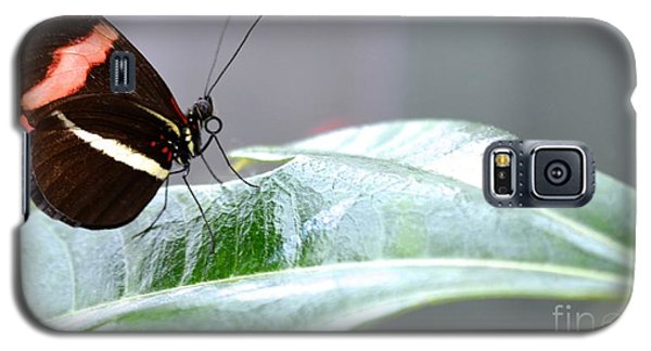Galaxy S5 Case featuring the photograph My Pretty Butterfly by Carla Carson