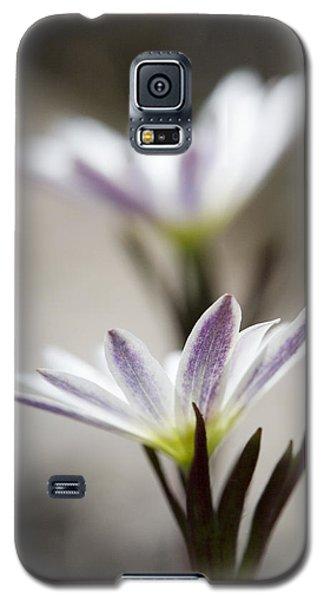 Mystical Anemones Galaxy S5 Case