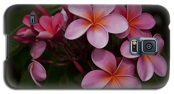 Na Lei Pua Melia O Wailua - Pink Tropical Plumeria Hawaii Galaxy S5 Case