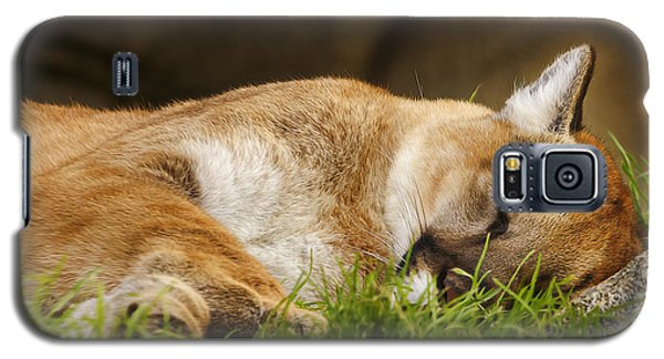 Galaxy S5 Case featuring the photograph Nap Time  by Brian Cross