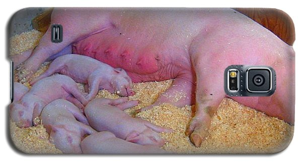 Galaxy S5 Case featuring the photograph Nap Time by Bruce Carpenter
