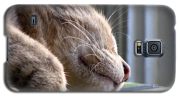Galaxy S5 Case featuring the photograph Nap Time by Sandra Bauser Digital Art