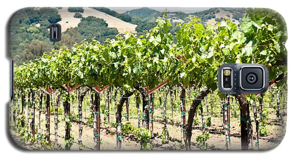 Napa Vineyard Grapes Galaxy S5 Case