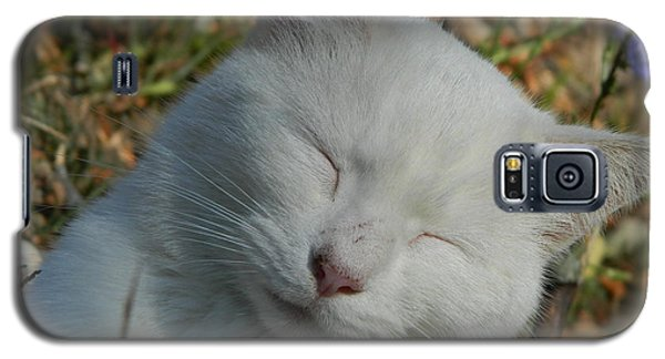 Galaxy S5 Case featuring the photograph Napping Barn Cat by Kathy Barney