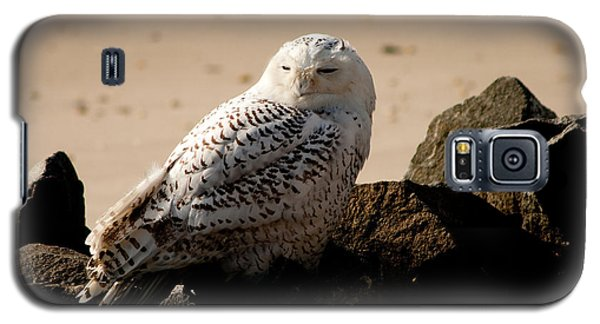 Napping On The Rocks Galaxy S5 Case