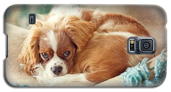 Napping Puppy Galaxy S5 Case