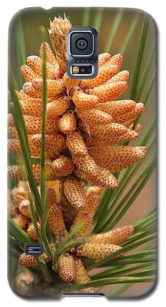 Nascent Pinecone Galaxy S5 Case