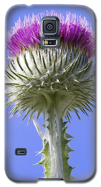 National Flower Of Scotland Galaxy S5 Case