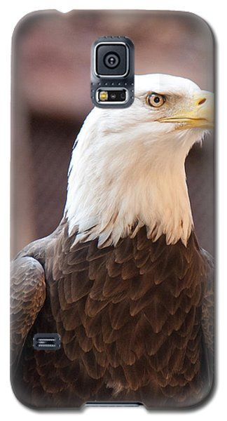 Galaxy S5 Case featuring the photograph American Bald Eagle by John Black