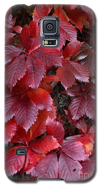 Galaxy S5 Case featuring the photograph Natural Beauty by Randy Bodkins