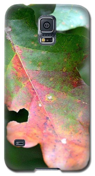 Natural Oak Leaf Abstract Galaxy S5 Case