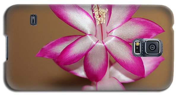 Natural Pink Christmas Cactus Galaxy S5 Case