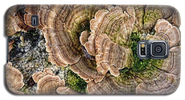 Nature Art Galaxy S5 Case