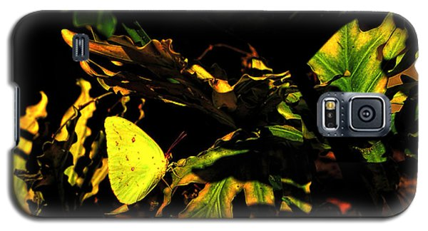 Nature's Colors Galaxy S5 Case