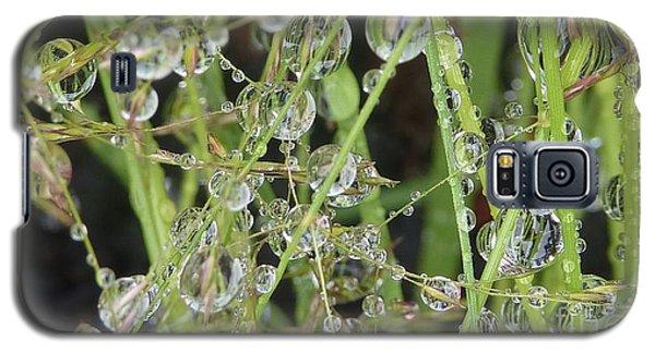 Natures Diamonds Galaxy S5 Case by Susan Garren