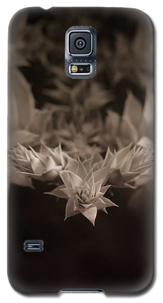 Nature's Directions - Sepia Galaxy S5 Case