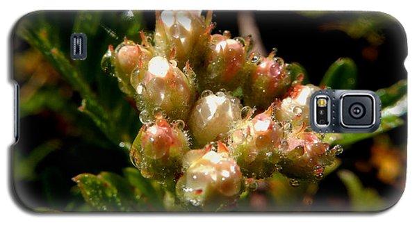 Nature's Drink Galaxy S5 Case by Pamela Walton