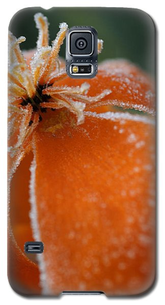 Natures Frost Galaxy S5 Case