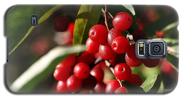 Natures Gift Of Red Berries Galaxy S5 Case