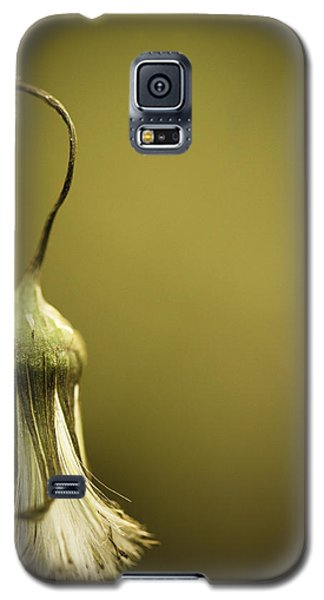 Nature's Little Lamp Galaxy S5 Case by Shane Holsclaw
