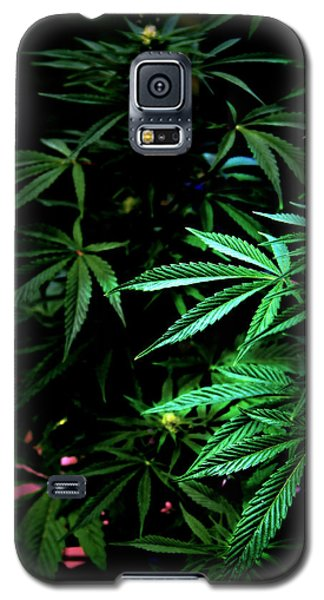 Galaxy S5 Case featuring the photograph Nature's Medicine by Jeanette C Landstrom