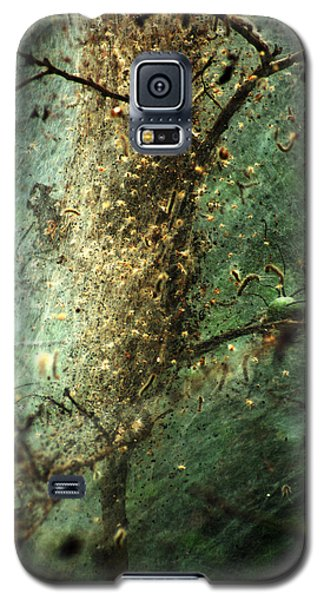 Natures Past Captured In A Web Galaxy S5 Case by Kim Pate