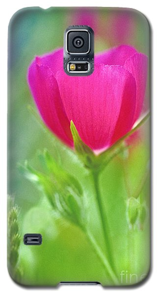Galaxy S5 Case featuring the photograph Natures Winecup South Texas by Dave Welling