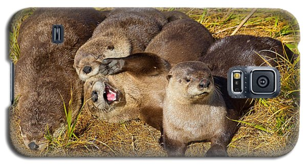 Galaxy S5 Case featuring the photograph Naughty Otters by Aaron Whittemore