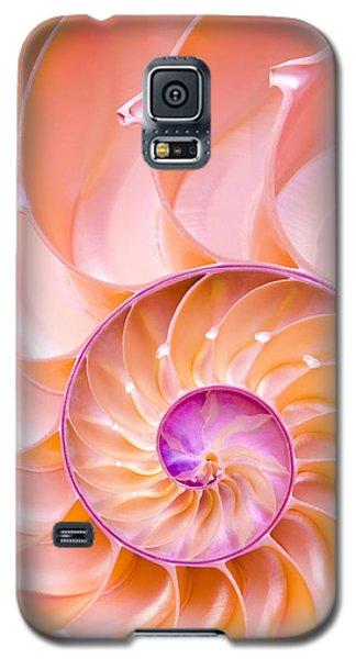 Nautilus Shell Detail Galaxy S5 Case by Jim Hughes