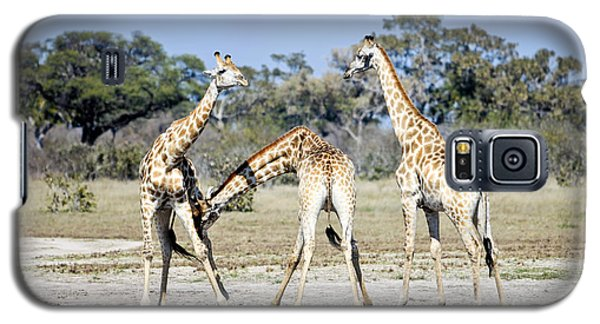 Necking Giraffes Botswana Galaxy S5 Case