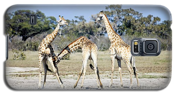 Galaxy S5 Case featuring the photograph Necking Giraffes Botswana by Liz Leyden