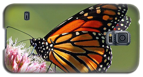 Galaxy S5 Case featuring the photograph Nectaring Monarch Butterfly by Debbie Oppermann