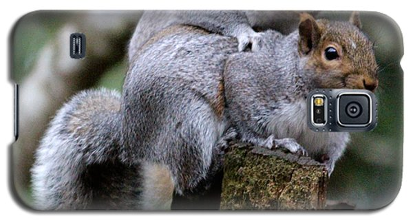 Fifty Shades Of Gray Squirrel Galaxy S5 Case by Kym Backland