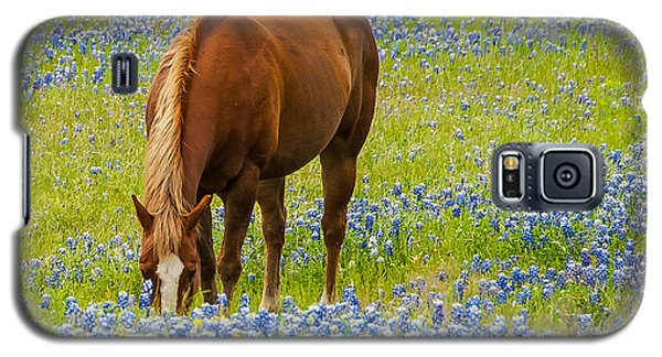 Nelly Grazing Among The Bluebonnets Galaxy S5 Case