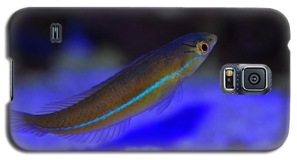 Neon Wrasse  Galaxy S5 Case