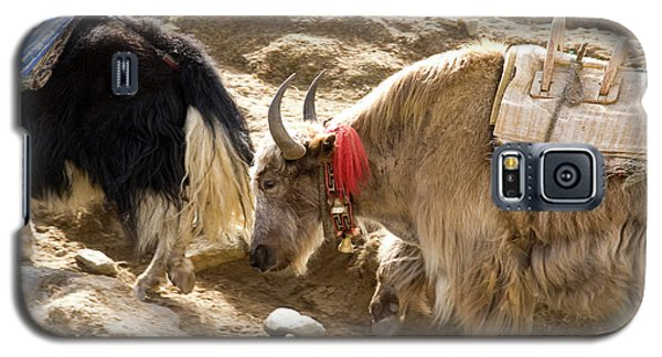 Nepal Yak Move Along The Everest Base Galaxy S5 Case