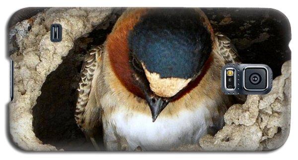 Nest Sweet Nest Galaxy S5 Case