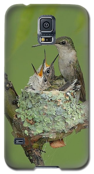 Galaxy S5 Case featuring the photograph Nesting Hummingbird Family by Daniel Behm
