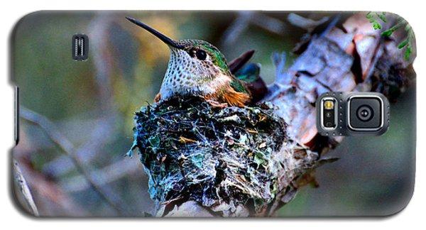 Nesting Hummingbird Galaxy S5 Case