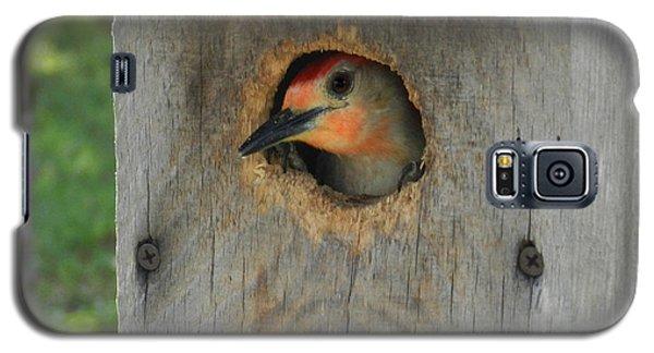Nesting Woodpecker Galaxy S5 Case