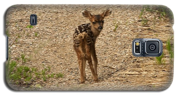 New Born Mule Deer Galaxy S5 Case by Daniel Hebard