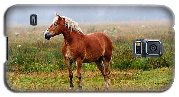 New Brunswick Horse Galaxy S5 Case