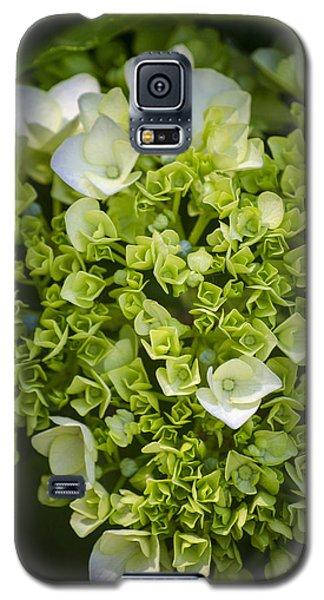 New Buds Galaxy S5 Case