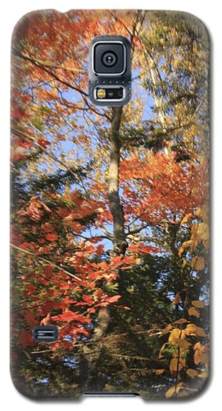 New England Trees Galaxy S5 Case