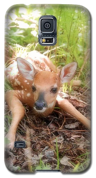 New Fawn In The Forest Galaxy S5 Case by Angie Rea