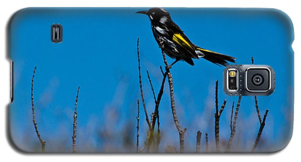 New Holland Honeyeater Galaxy S5 Case by Miroslava Jurcik